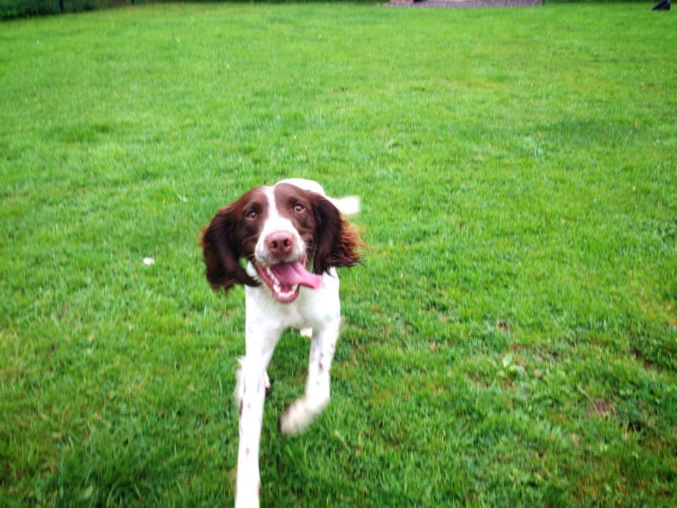 Carsickness Police Dog